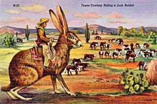 Vintage postcard with cowboy riding a Jack Rabbit